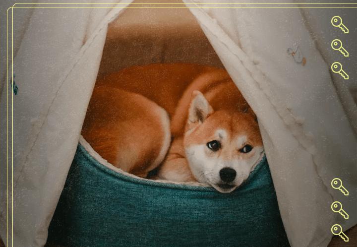 Pet em apartamento - O que diz a lei?