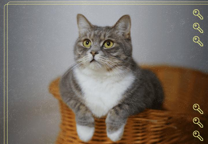 Como criar gato em apartamento