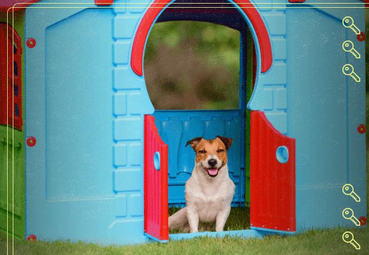O que um apartamento pet friendly precisa ter?